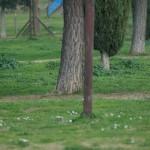 Foto con focale a 300mm